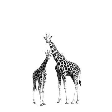 papier peint panoramique girafes noir et blanc