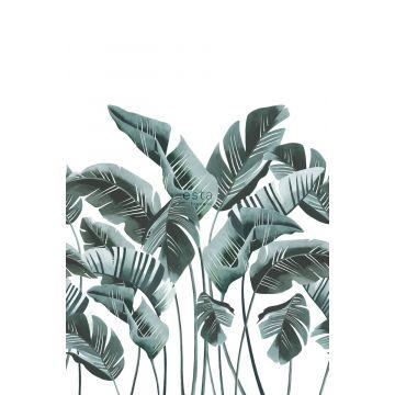 papier peint panoramique grandes feuilles de bananier bleu vert