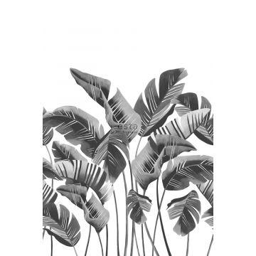 papier peint panoramique grandes feuilles de bananier noir et blanc