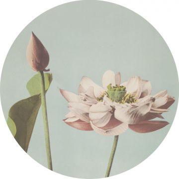 papier peint panoramique rond adhésif fleur de lotus rose clair et bleu gris